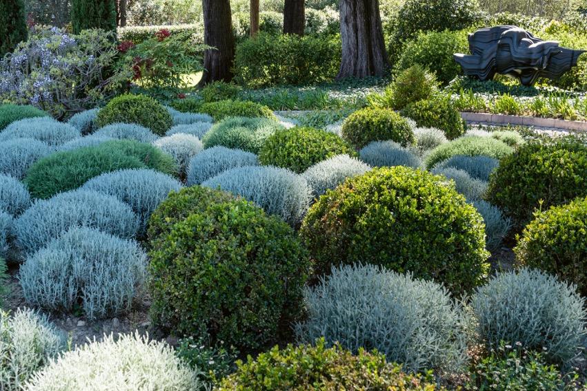 plantes2_mus