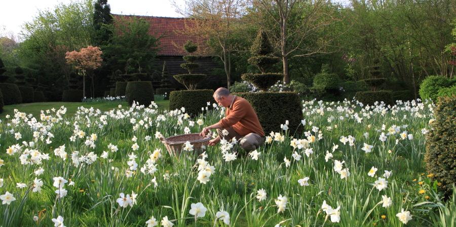 """A deux kilomètres du charmant bourg de Cassel, Emmanuel de Quillac et son associé Bruno Caron ont en une dizaine d'années donné un charme incomparable à une ferme ancienne restaurée, en enveloppant celle ci d'un jardin. Ce jardin est fait dans le style historique des Flandres et le mot """"naturel"""" est bien celui qui lui convient le mieux. Les milliers de narcisses qui envahissent les pelouses chaque printemps en est l'exemple le plus frappant. Ici, Emmanuel de Quillac passe tous les matins couper les fleurs fanées des Narcissus 'Mount Hood'."""
