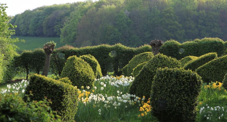 """A deux kilomètres du charmant bourg de Cassel, Emmanuel de Quillac et son associé Bruno Caron ont en une dizaine d'années donné un charme incomparable à une ferme ancienne restaurée, en enveloppant celle ci d'un jardin. Ce jardin est fait dans le style historique des Flandres et le mot """"naturel"""" est bien celui qui lui convient le mieux. Les milliers de narcisses qui envahissent les pelouses chaque printemps en est l'exemple le plus frappant. Ici, le jardin de buis taillé en berlingot."""