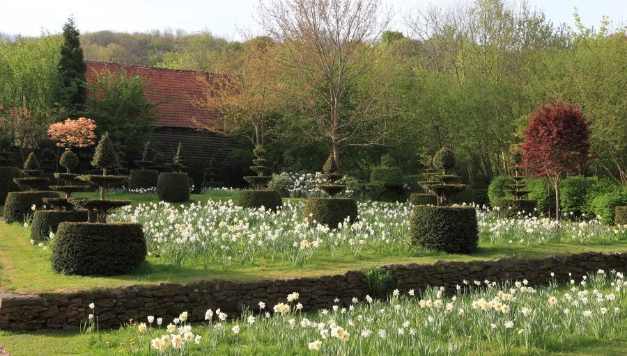 """A deux kilomètres du charmant bourg de Cassel, Emmanuel de Quillac et son associé Bruno Caron ont en une dizaine d'années donné un charme incomparable à une ferme ancienne restaurée, en enveloppant celle ci d'un jardin. Ce jardin est fait dans le style historique des Flandres et le mot """"naturel"""" est bien celui qui lui convient le mieux. Les milliers de narcisses qui envahissent les pelouses chaque printemps en est l'exemple le plus frappant. Ici, Narcissus 'Mount Hood'."""